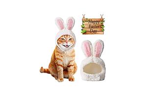 Des oreilles de lapin pour chats