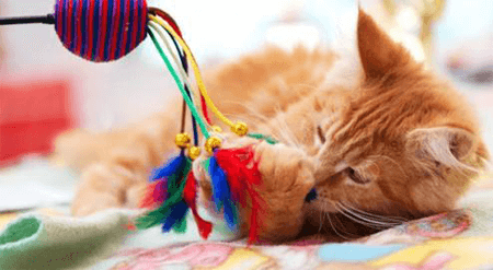Les bonnes raisons de jouer avec son chat
